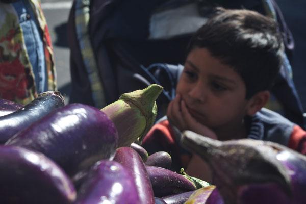 eggplant_daydreams