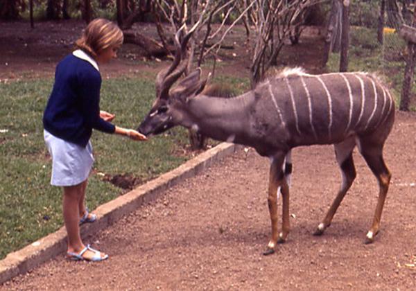 k-kudu