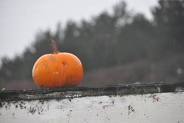 012110_pumpkin_roof2