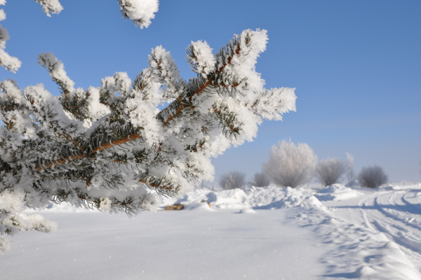 hoar-frost_14