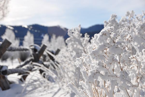 victor_winter_6