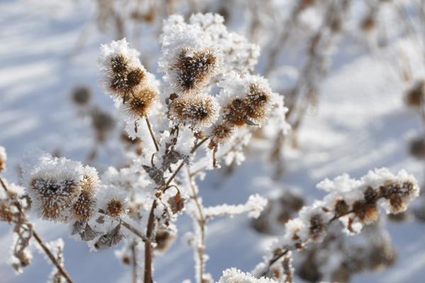 victor_winter_7