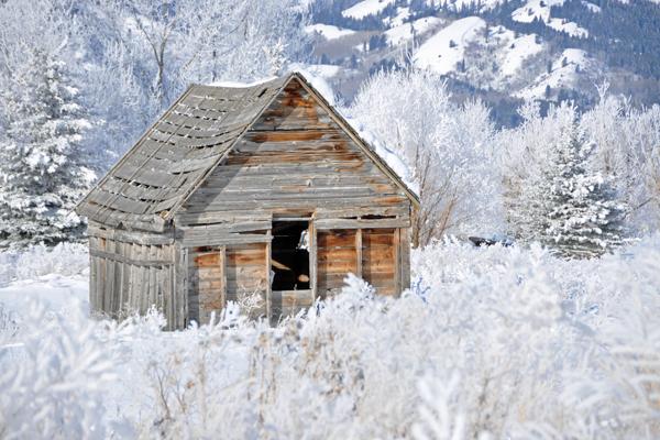 victor_winter_8