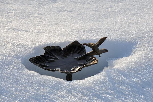 birdbath-in-snow