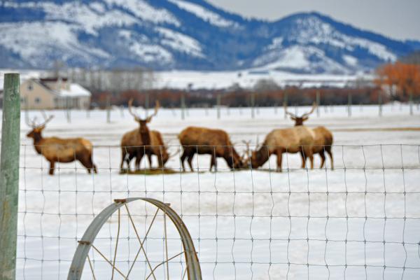 elk-distance1