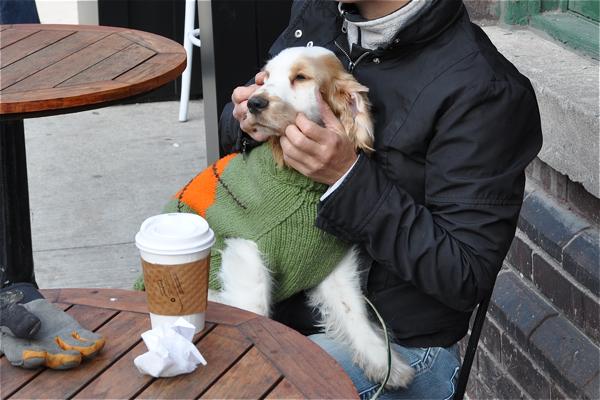 restaurant-dogs15