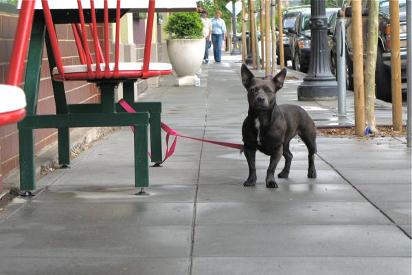 restaurant-dogs6