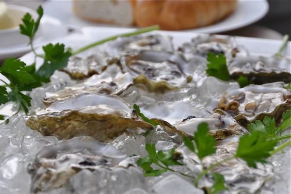 blue-point-oysters4