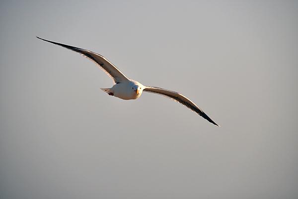 seagull3_rickandkathy_com