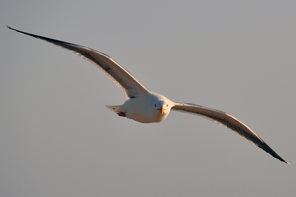 seagull4_rickandkathy_com