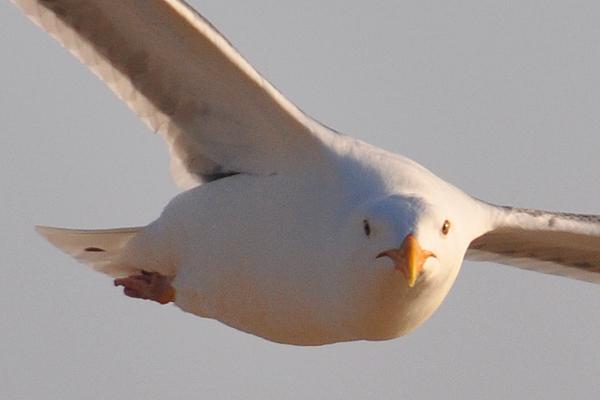 seagull5_rickandkathy_com