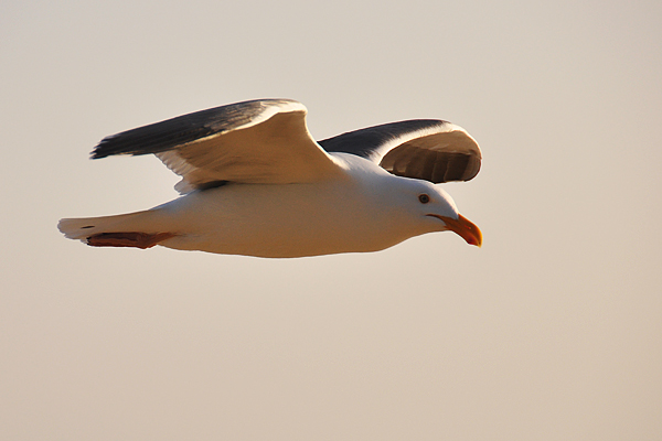 seagull6_rickandkathy_com
