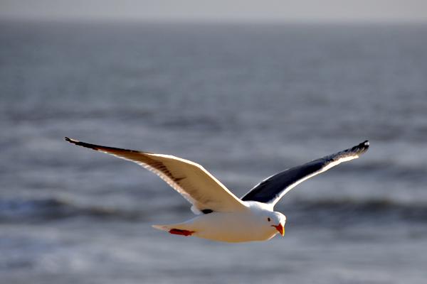 seagull8_rickandkathy_com