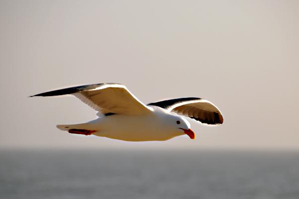 seagull9_rickandkathy_com