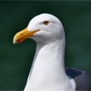 Post image for Bird Watchers