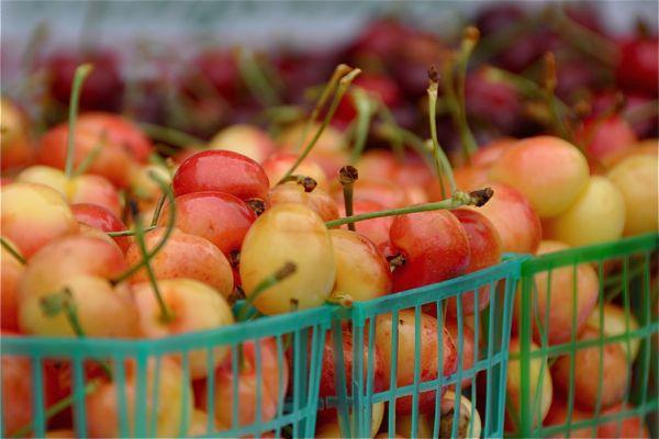 hmb-farmers-marketc2a9-rickandkathy_8
