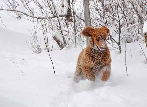 Winnie_snow4
