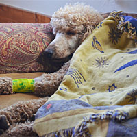 Post image for Sick Puppy