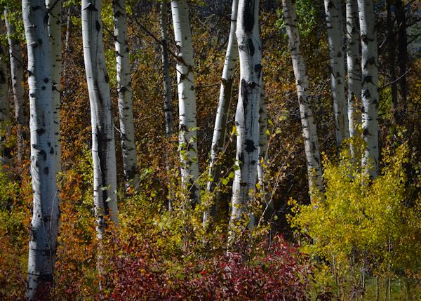 Autumn Leaves-2