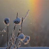 Post image for New Year Frostbow