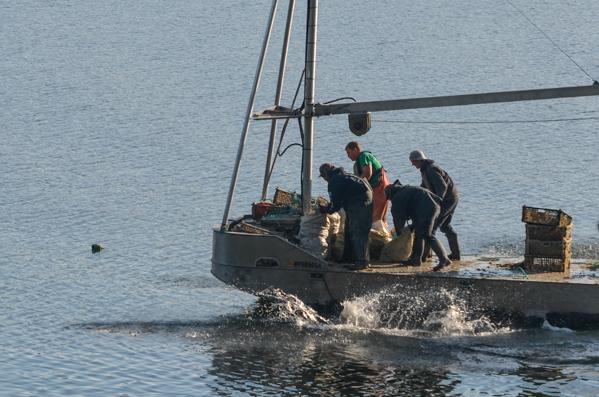 Fanny Bay Oysters-25