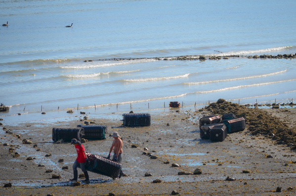 Fanny Bay Oysters-50