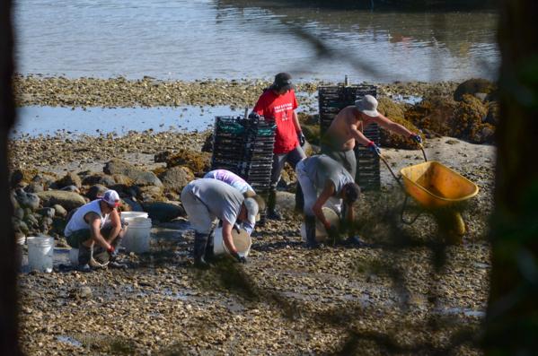 Fanny Bay Oysters-51