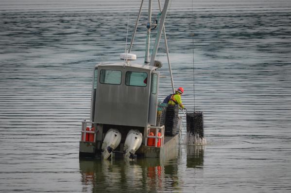 Fanny Bay Oysters-53