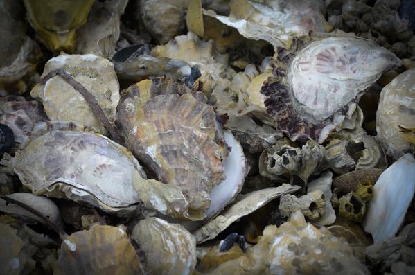Fanny Bay Oysters-62