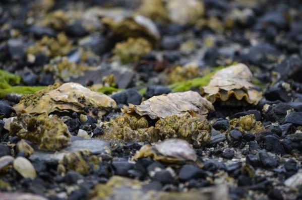 Fanny Bay Oysters-63