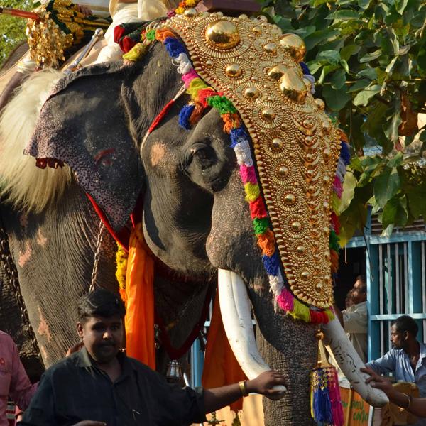 India Temple Festival27